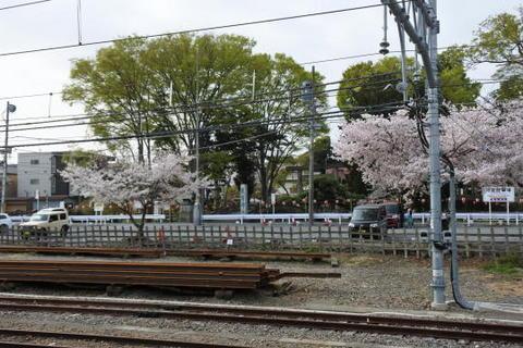 神社の桜がきれいだった